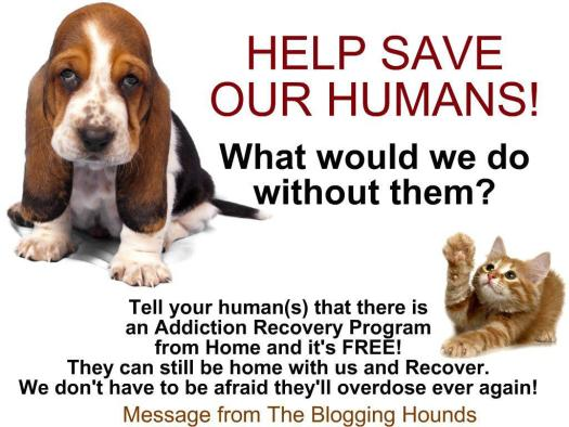 the-blogging-hounds-recovery-ad-2